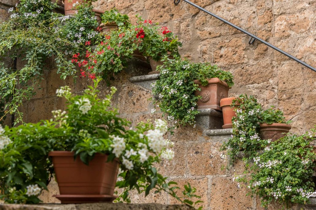 flowering houses in Umbria