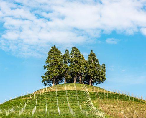 Alba, Langhe, piedmont, Italy