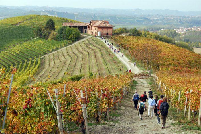 Langhe, piedmont, Italy