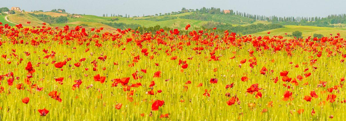 Sud Toscana, spectacular landscapes
