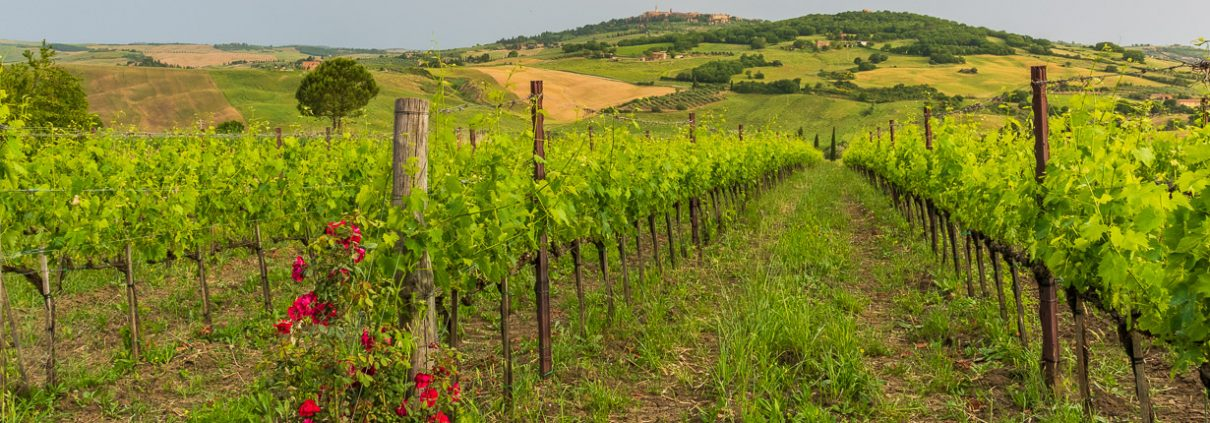 Sud Toscana, vineyards and spectacular landscapes