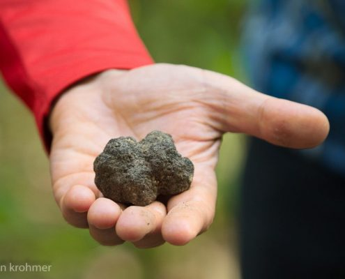 Truffle hunting in Piedmont- Italy