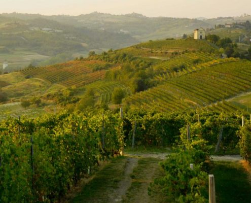 Landscape near Cascina Gilli- Piedmont- Italy