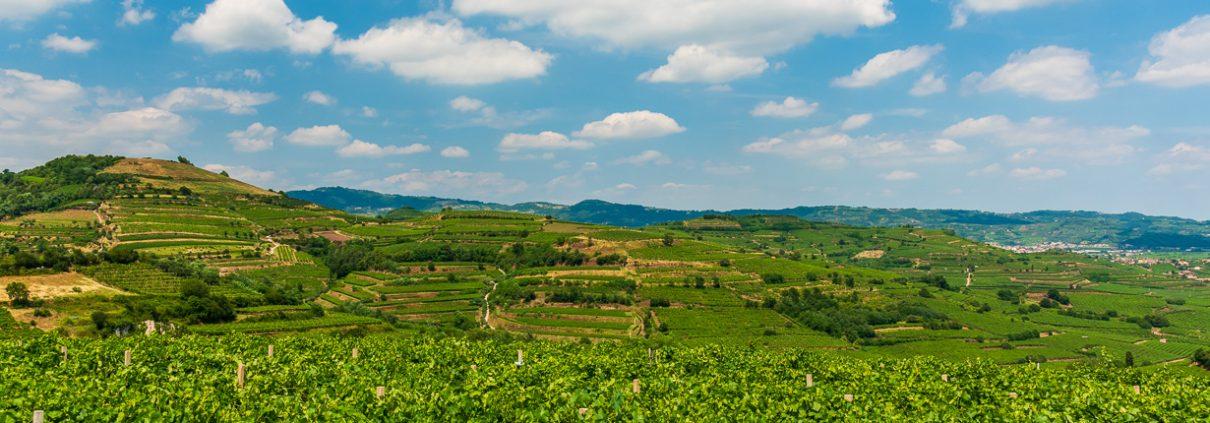 Vineyards at Soave- Veneto- Italy