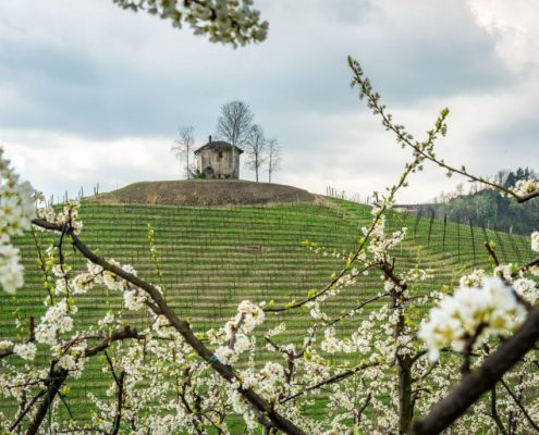 Hike past the Ciabot (vineyard house) in the Roero- Piedmont- Italy