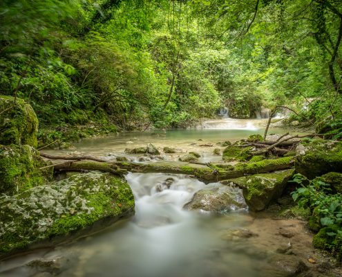 Hikings in the wood- Veneto- Italy